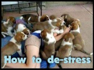 de-stress, happy, relax, fun, play