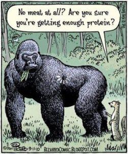 Protein_Gorilla