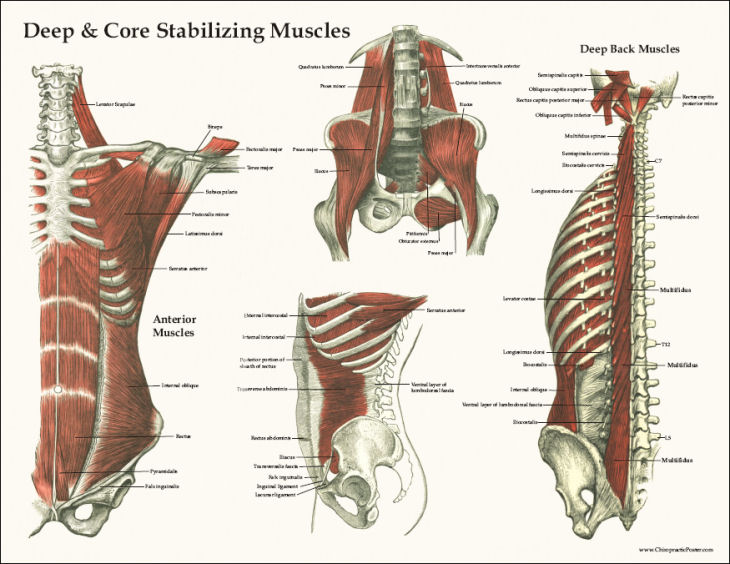How To Build Pelvic Muscles